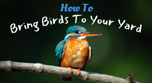 How to Bring Birds to Your Yard